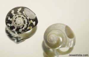 """Mustique"" Shell Ring"